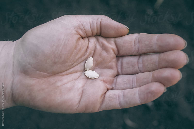 Farmer holding Pumpkin seeds by Rowena Naylor for Stocksy United