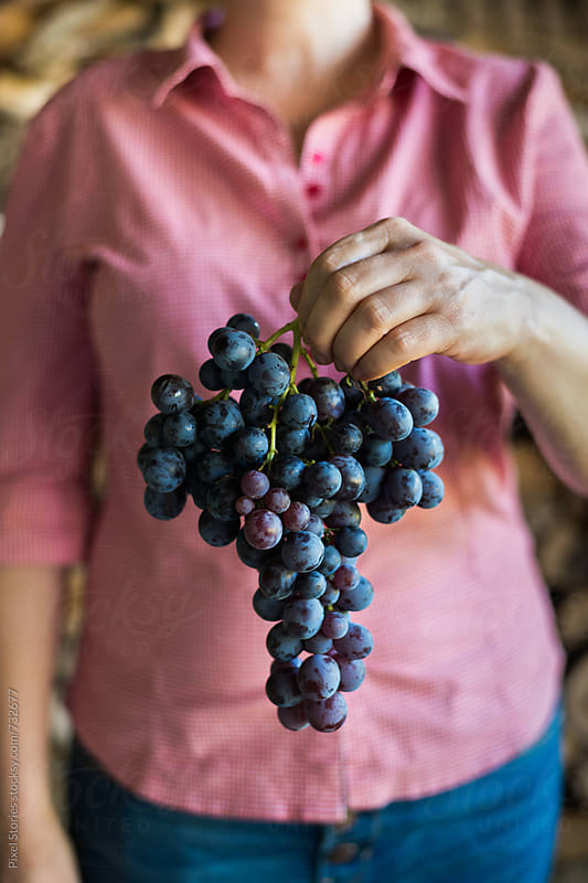 Woman holding just picked cluster of grapes by Pixel Stories for Stocksy United