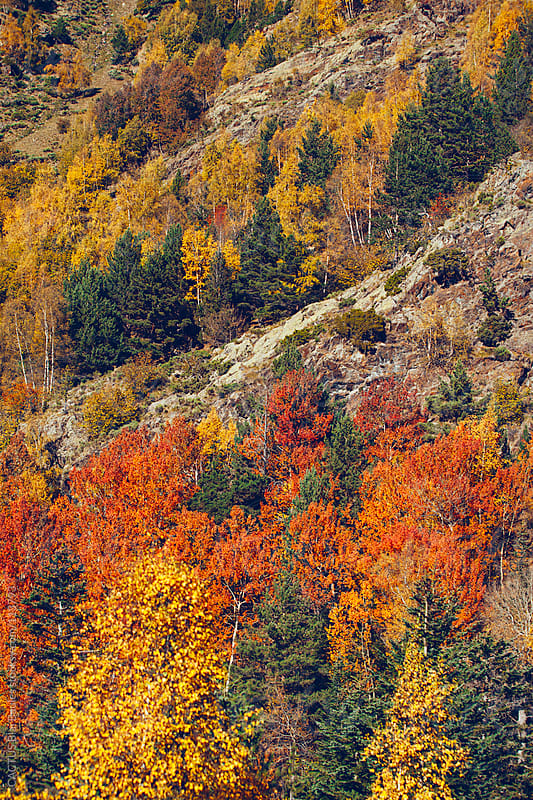 Pyrenees fall landscape by CACTUS Blai Baules for Stocksy United