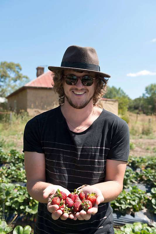 strawberry picking by Gillian Vann for Stocksy United