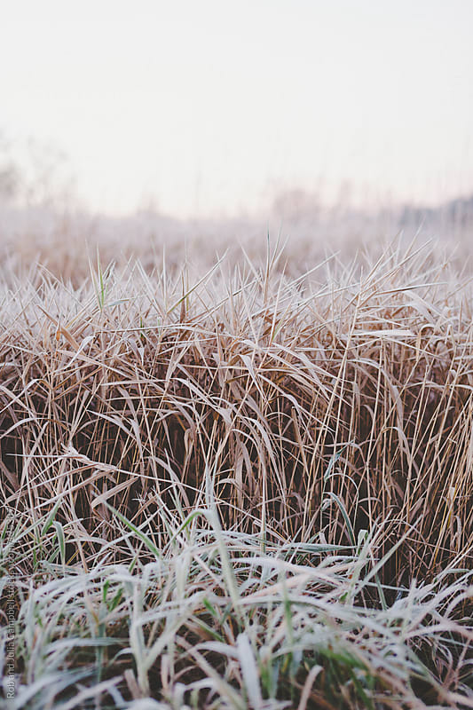 Frozen, grass in winter by Rob and Julia Campbell for Stocksy United