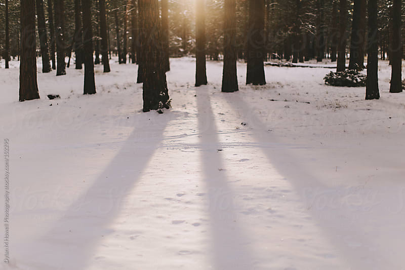 Morning winter light by Dylan M Howell Photography for Stocksy United