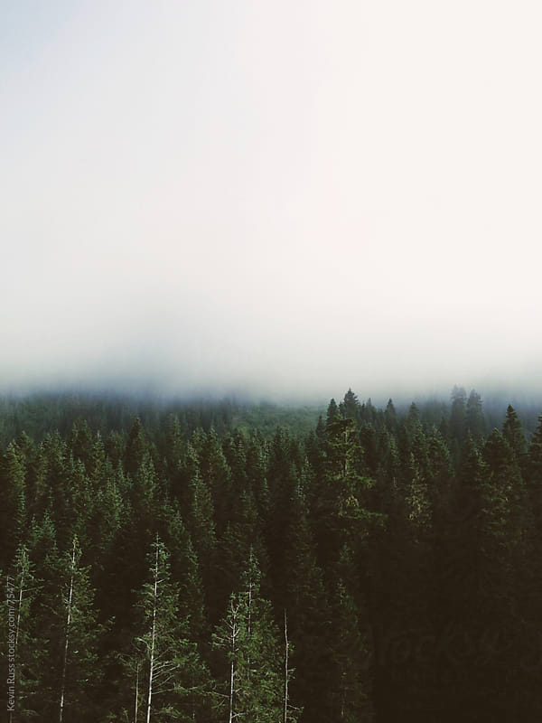 Dramatic Forest Fog by Kevin Russ for Stocksy United
