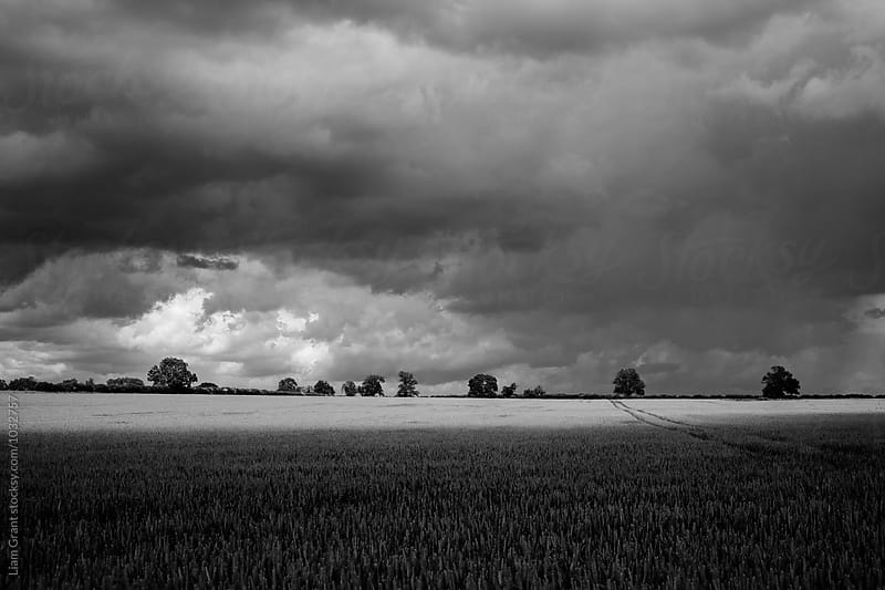 Storm clouds and sunlight on a wheat field. Norfolk, UK. by Liam Grant for Stocksy United