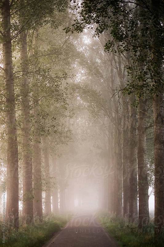 Road to nowhere in misty landscape by Robert-Paul Jansen for Stocksy United