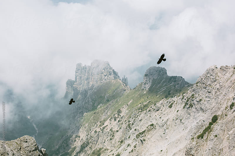 Two birds flying on top of the mountain by michela ravasio for Stocksy United