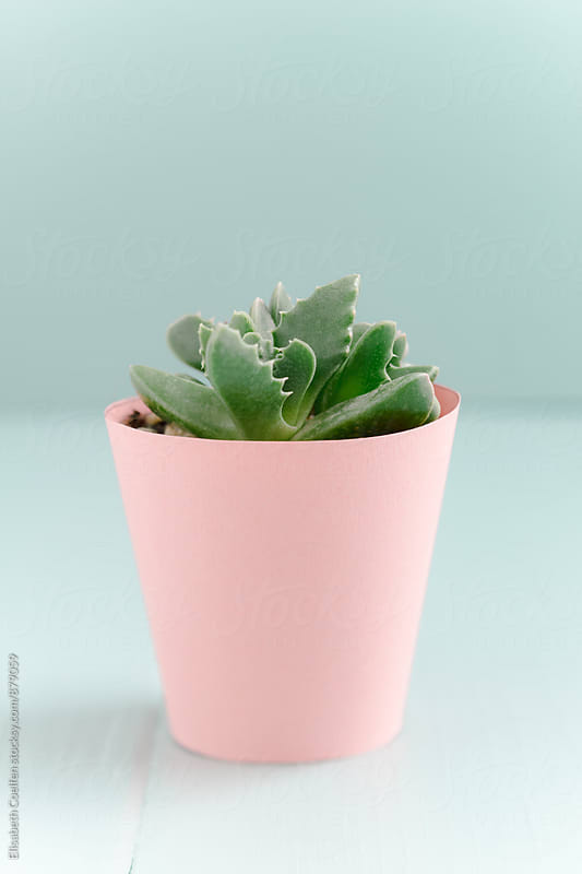 Mini succulent in pastel-coloured handmade paper flower pot by Elisabeth Coelfen for Stocksy United