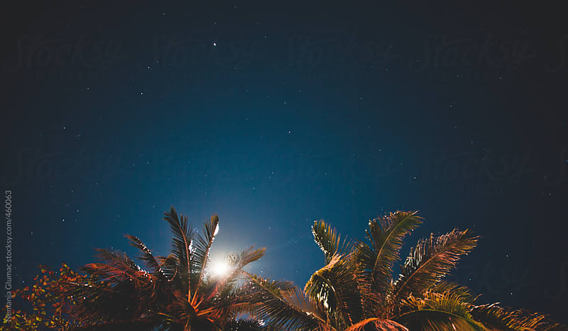 Palm Branches and Full Moon Behind Them by Nemanja Glumac for Stocksy United