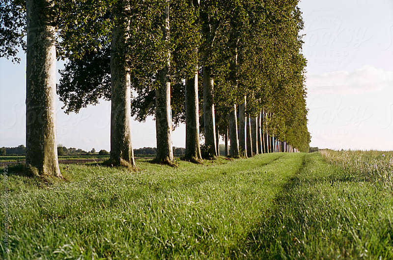 Tree Lined Field In Provence, France by Sara Remington for Stocksy United