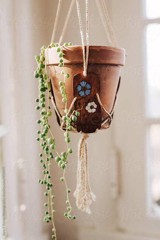 Hanging house plant by Sara K Byrne Photography for Stocksy United