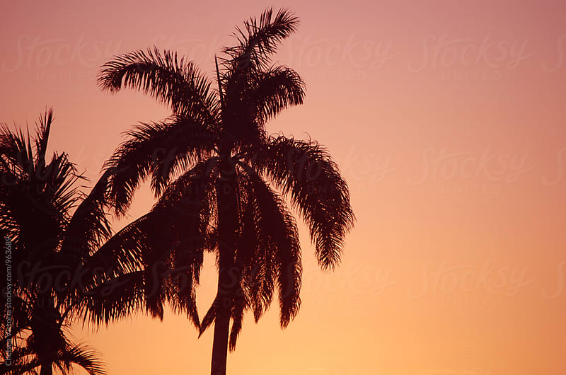 Palm trees at sunset by Chelsea Victoria for Stocksy United
