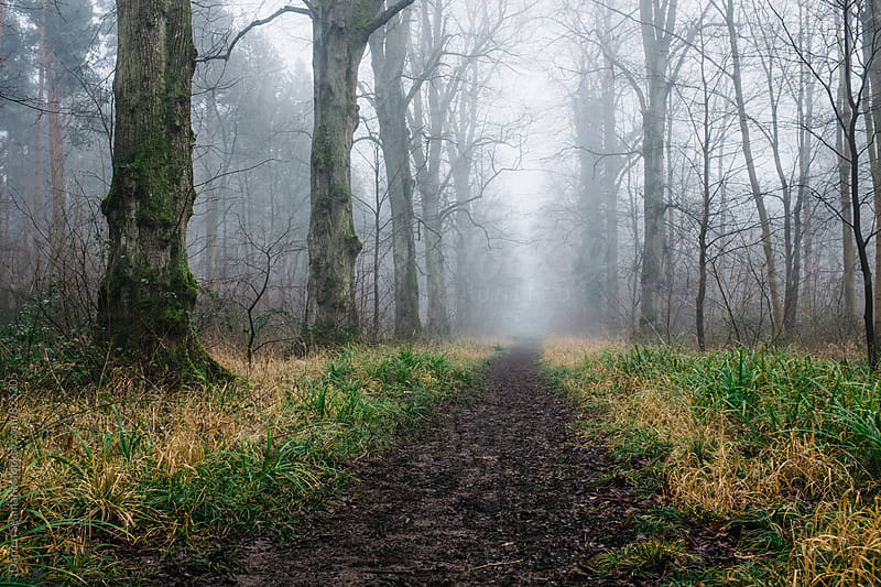 A muddy path through a misty forest by Darren Seamark for Stocksy United