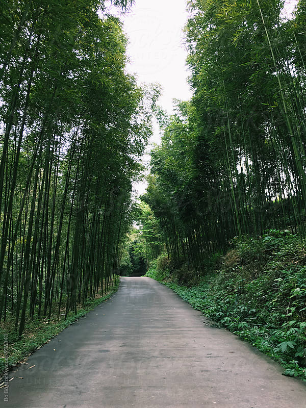 small road in bamboo forest by Bo Bo for Stocksy United