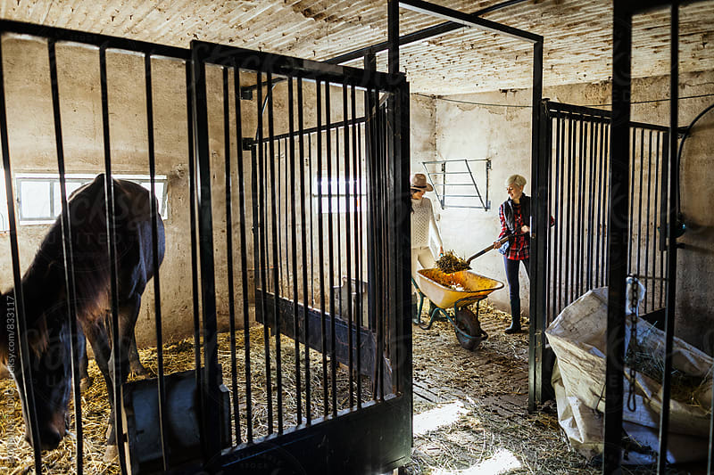 Women farmers working on stable horses. by BONNINSTUDIO for Stocksy United