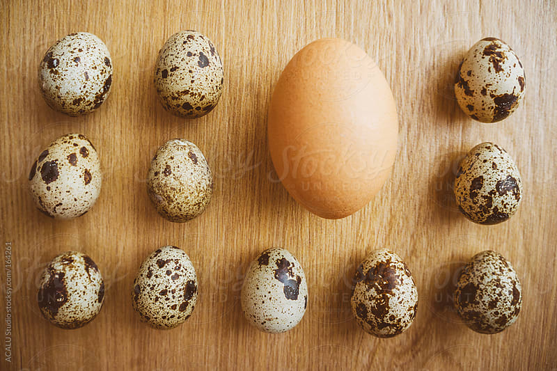 Quail eggs and chicken aligned by ACALU Studio for Stocksy United