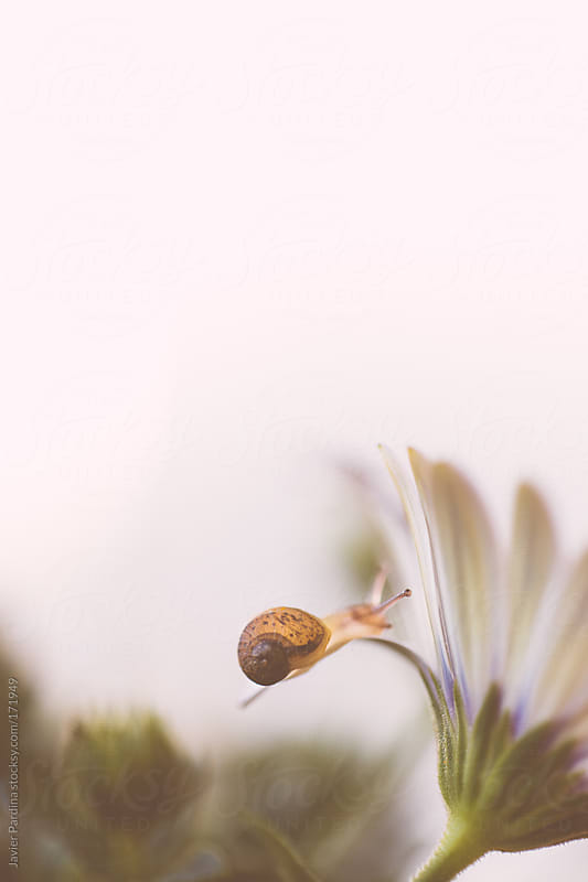 small snail crawling along the ground by Javier Pardina for Stocksy United