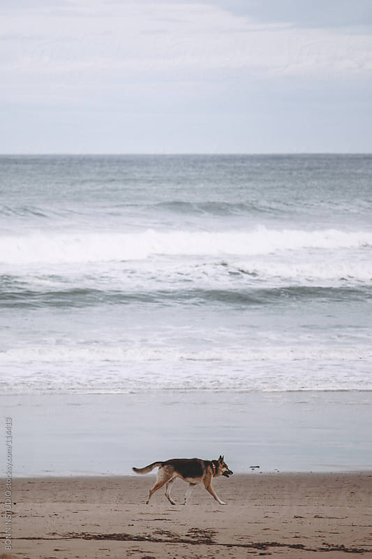 Alone dog on Cantabrian beach. by BONNINSTUDIO for Stocksy United