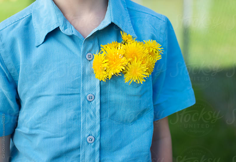 Boy with bouquet of dandelions stuffed in his shirt pocket by Cara Dolan for Stocksy United