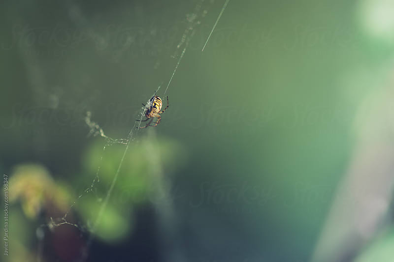 small spider walking across your network by Javier Pardina for Stocksy United