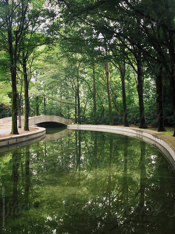 Reflecting pool surrounded by green trees in Washington DC by B. Harvey for Stocksy United