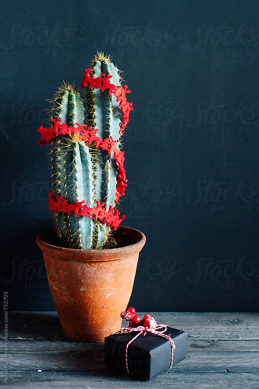 Cactus decorated with a red Christmas garland by Helen Rushbrook for Stocksy United