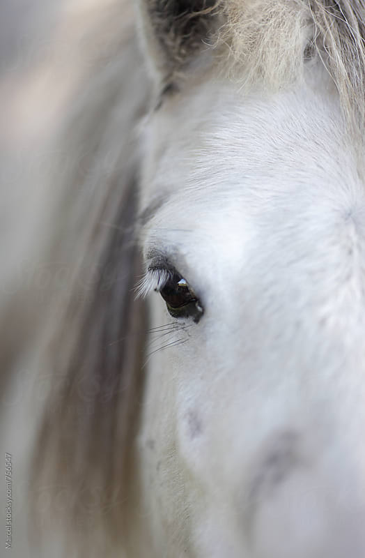 Close up of the face and eye of a pretty white pony horse by Marcel for Stocksy United