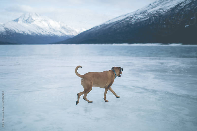 Frozen Eklutna by Jake Elko for Stocksy United