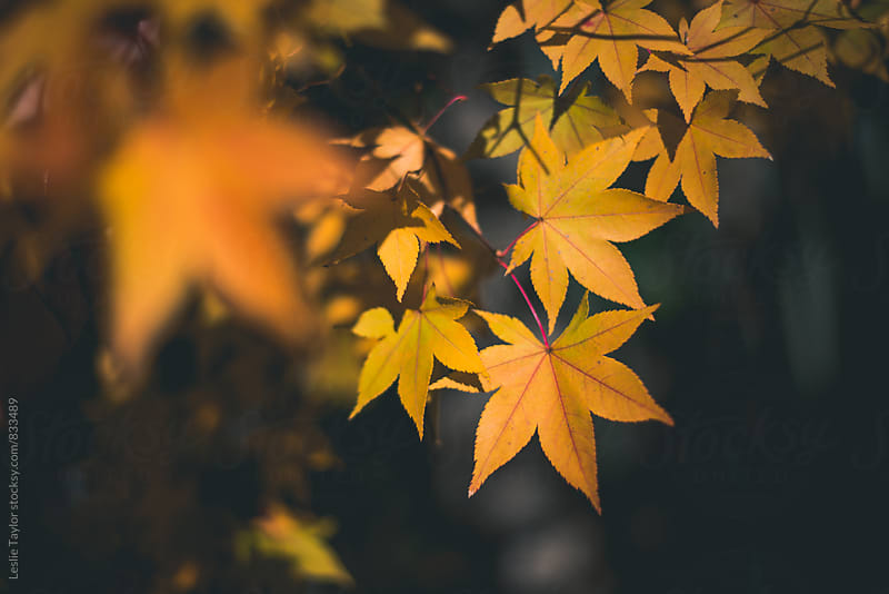 The Stars of Autumn by Leslie Taylor for Stocksy United