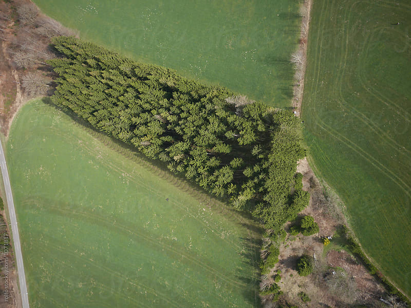 aerial shot of green forest by rolfo for Stocksy United