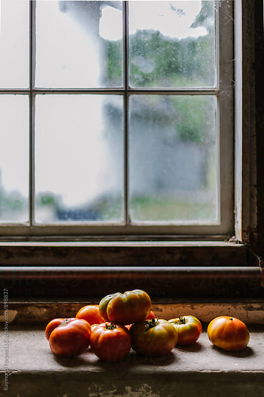 Heirloom Tomatoes on  Window Sill by Raymond Forbes LLC for Stocksy United