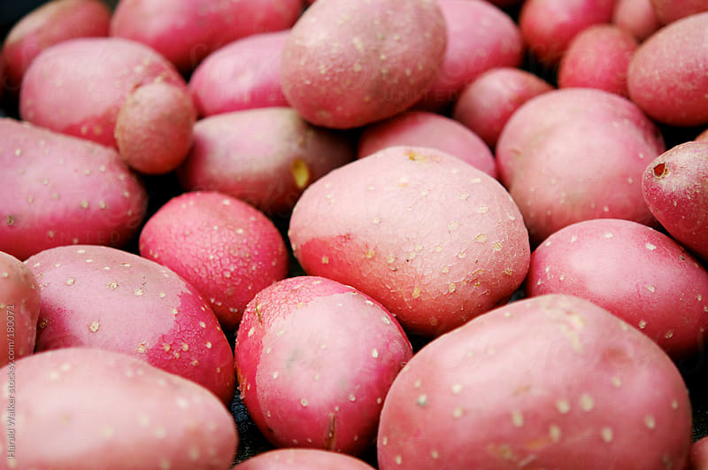 Red skin potatoes by Harald Walker for Stocksy United