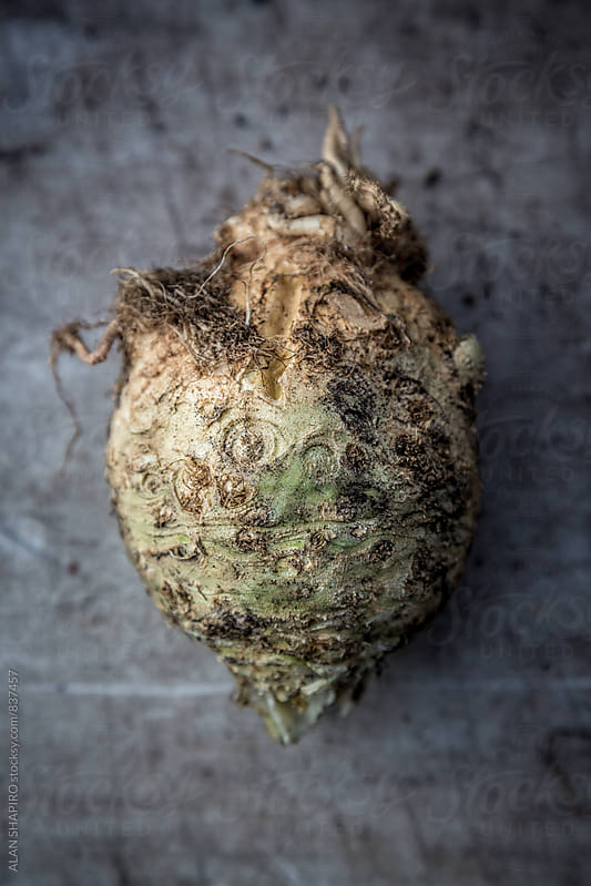 celery root by alan shapiro for Stocksy United