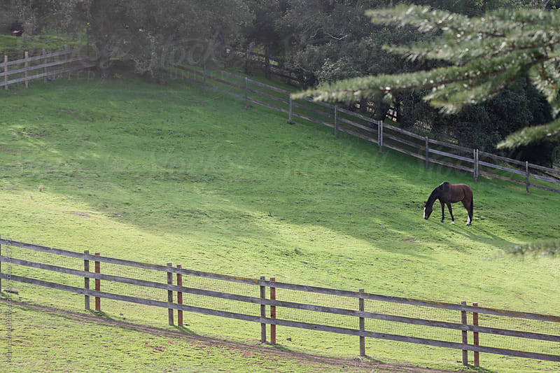 Lone horse grazes in a pasture of green grass by Monica Murphy for Stocksy United
