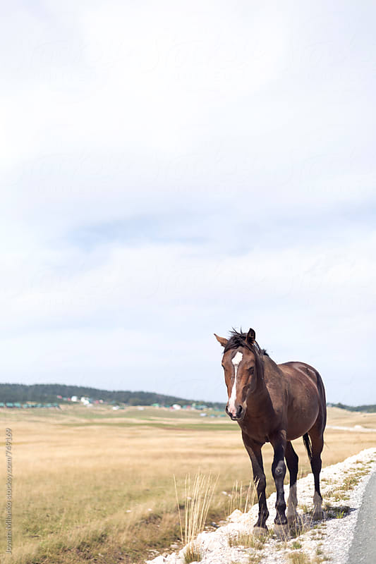 Wild horse standing next to the road by Jovana Milanko for Stocksy United