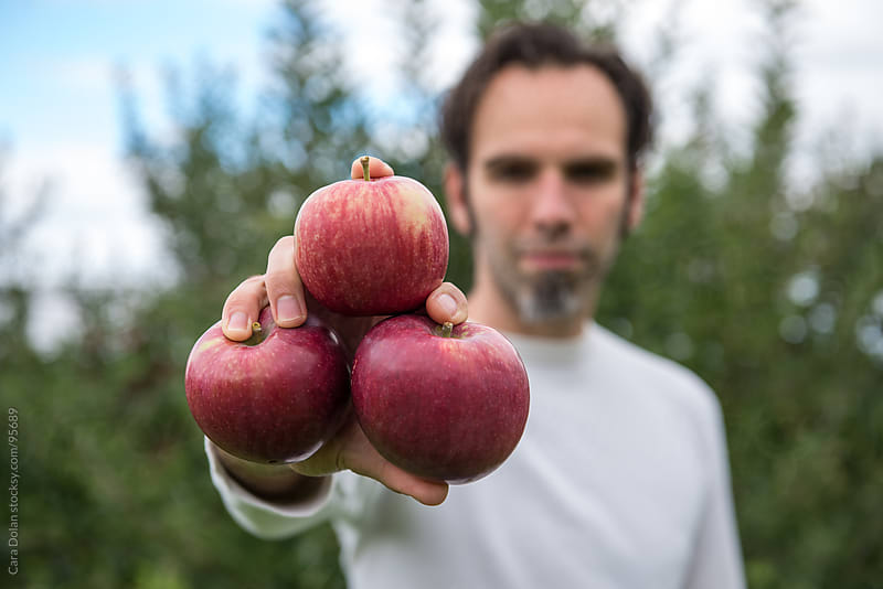 Man in apple orchard holds 3 freshly picked apples in his hand by Cara Dolan for Stocksy United