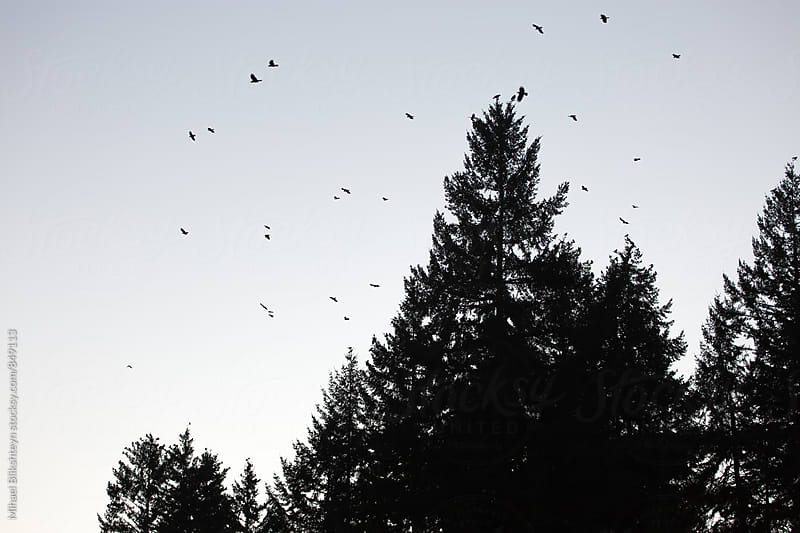 Silhouette of a group of birds against the sky and trees by Mihael Blikshteyn for Stocksy United
