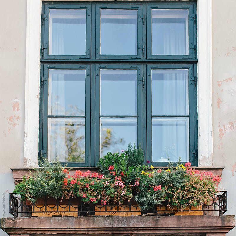 Window and flowers by Zocky for Stocksy United