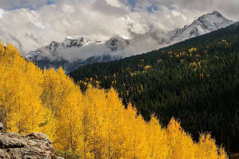 Autumn aspens with first snow in the distance by Mick Follari for Stocksy United