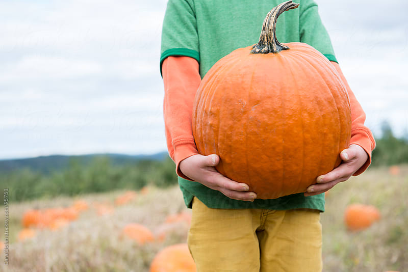 Child standing in a pumpkin patch holds a large pumpkin in his arms by Cara Dolan for Stocksy United