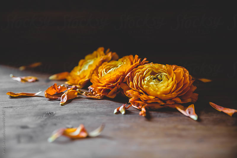 Dropped flowers on floor by Vera Lair for Stocksy United
