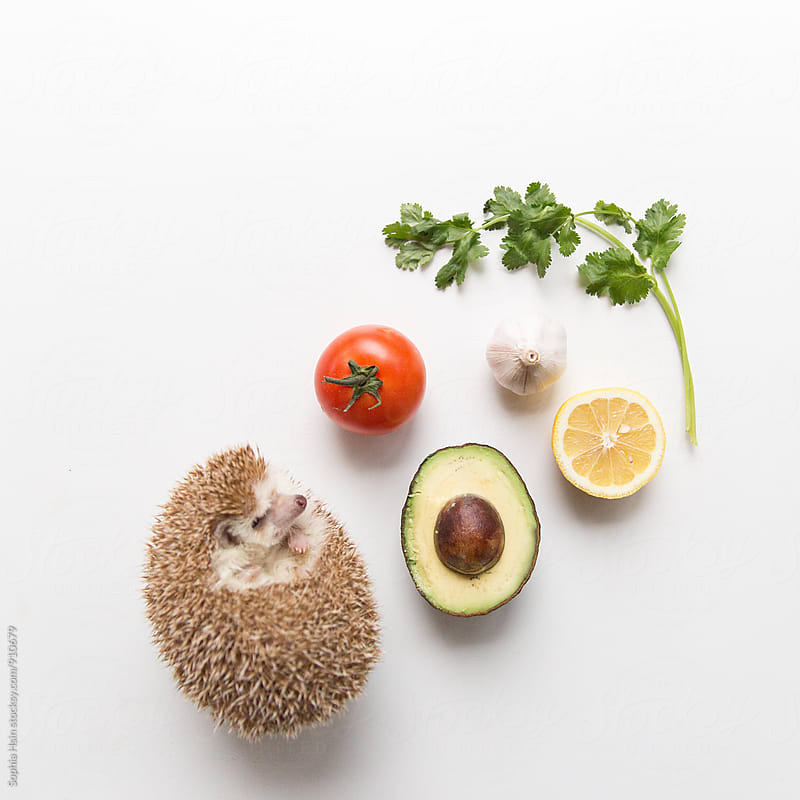 Healthy Hedgehog with vegetables by Sophia Hsin for Stocksy United