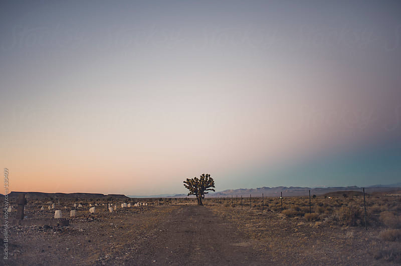 A lonesome joshua tree on a dusky desert horizon in the cemetery by Rachel Bellinsky for Stocksy United