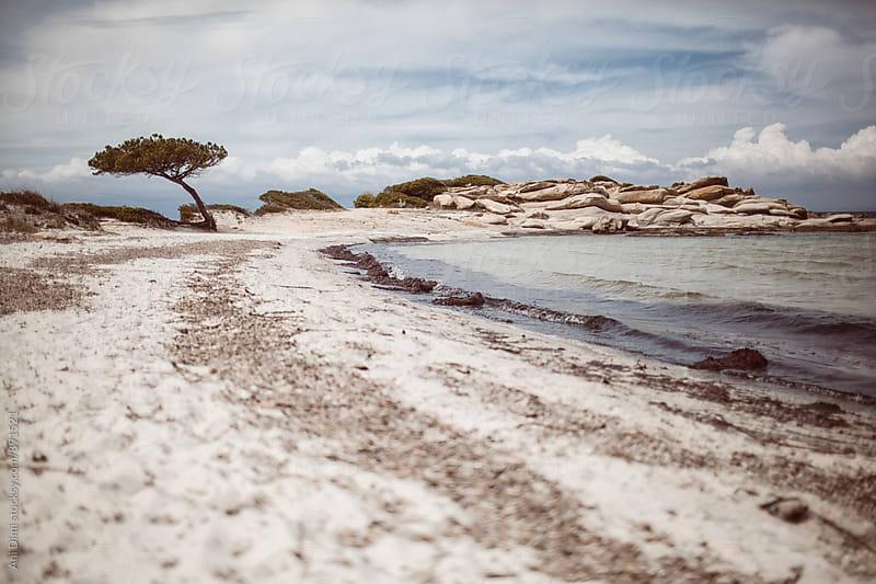 Beach coast  by Ani Dimi for Stocksy United