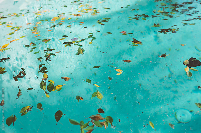 Leaves on a swimming pool by Lucas Saugen for Stocksy United