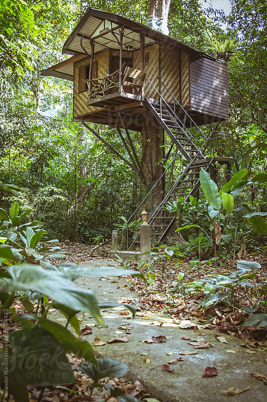 treehouse in the jungle by Leander Nardin for Stocksy United