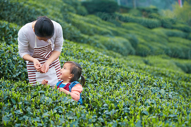 little girl with her mother in the tea farm by Bo Bo for Stocksy United