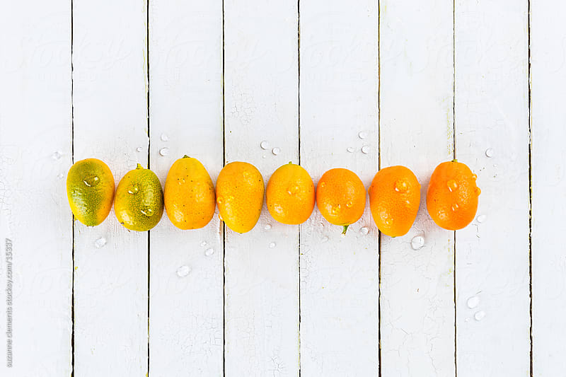 Fresh Organic Kumquats in a Row by suzanne clements for Stocksy United