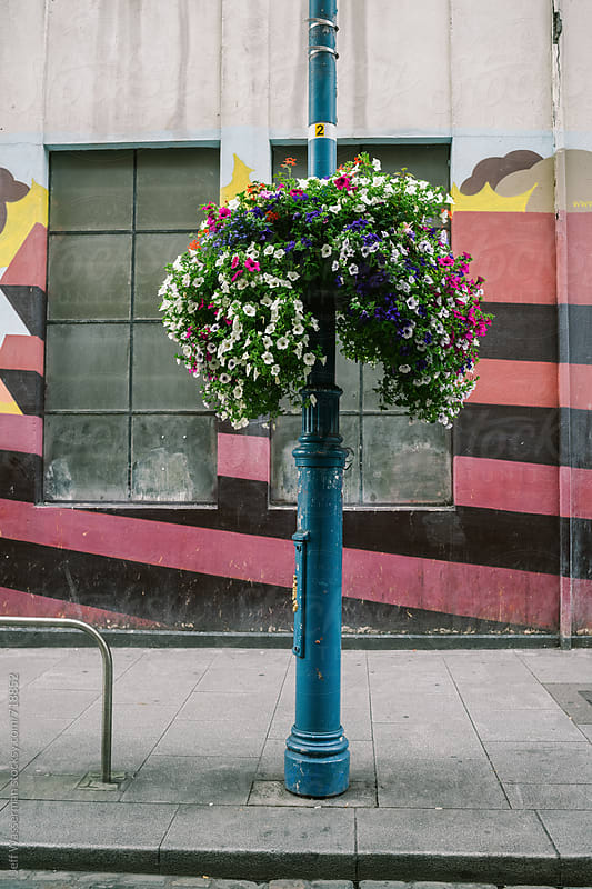 Flower on Dublin Street by Jeff Wasserman for Stocksy United