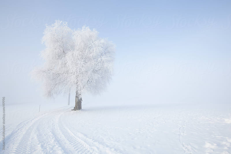 Frozen tree in winter landscape by Robert Kohlhuber for Stocksy United