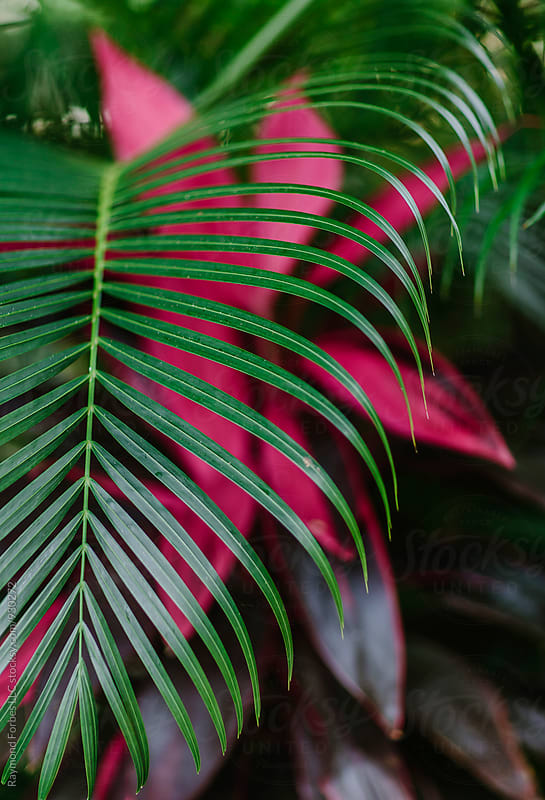 Pink and Green Palm Frond by Raymond Forbes LLC for Stocksy United